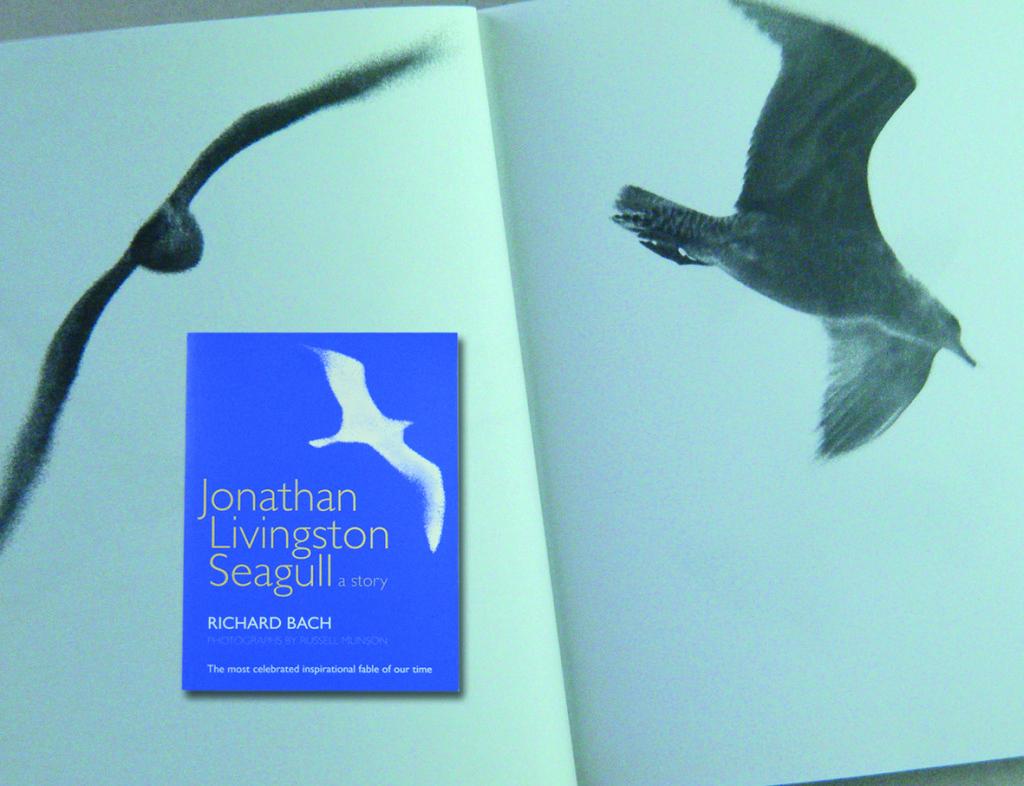 JonSeagull